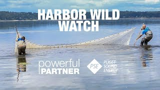 Powerful Partner - Harbor Wild Watch